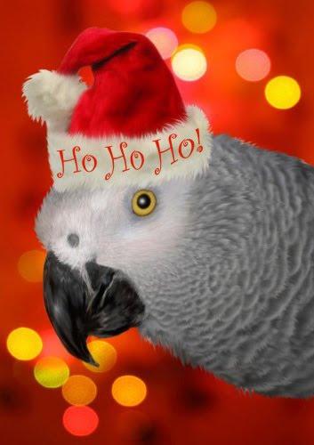 African Grey Santa Parrot