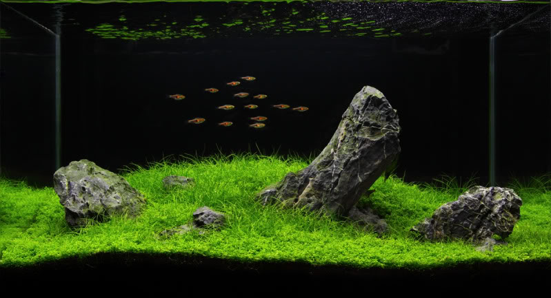 Manage your freshwater aquarium tropical fishes and Aquarium landscape