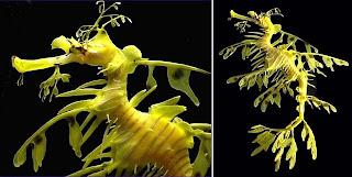 [imagetag] http://1.bp.blogspot.com/_MOnZG8JLO0w/SkunGzbwhUI/AAAAAAAAACI/1TeWJPtWdCA/s320/naga-laut-sea-dragon-01.jpg