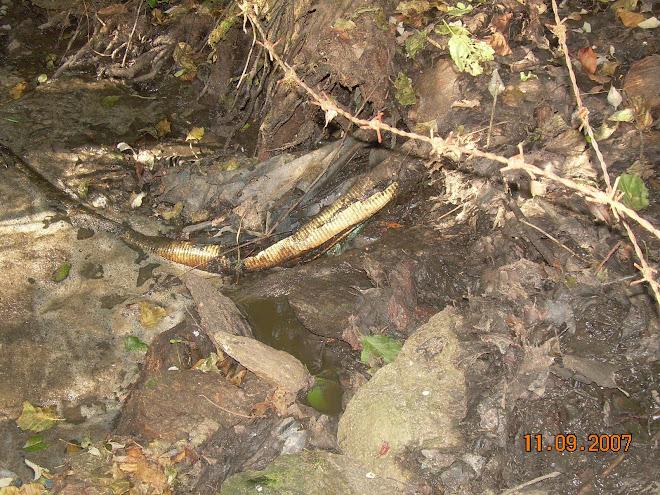 Río Catasol