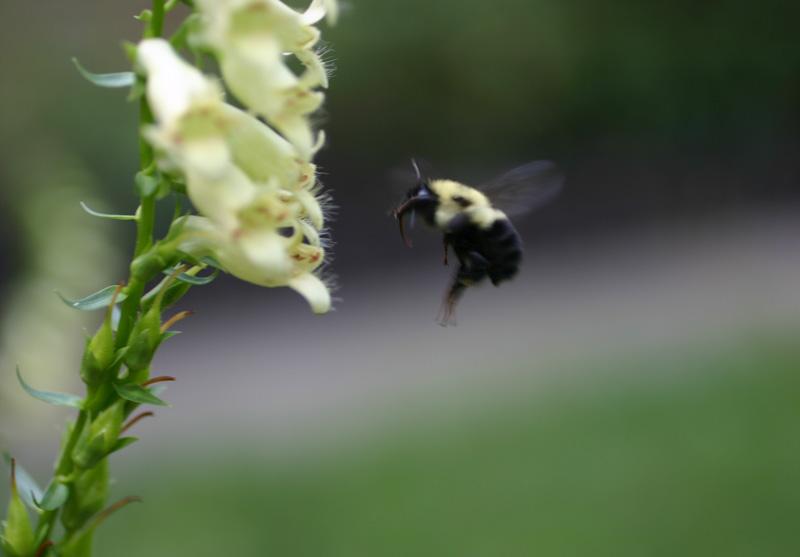 [jun+15+bee+2]