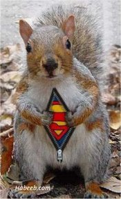 YIPPY-NIPPY SUPER SQUIRREL