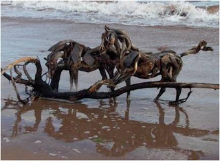 Cavalos observam arvore