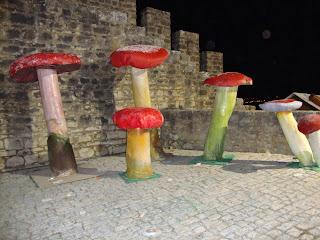 Fotos Cogumelos Gigantes