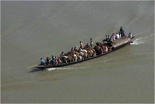 Transporte de Vacas en el Río Brahmaputra, Bangladesh