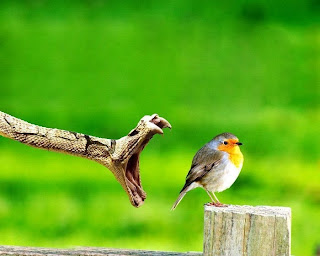 cobra ataca pássaro
