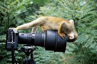 Macaco curioso com Máquina fotográfica