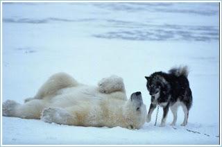 Brincadeira entre os dois animais