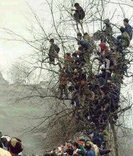 rapazes em cima da árvore