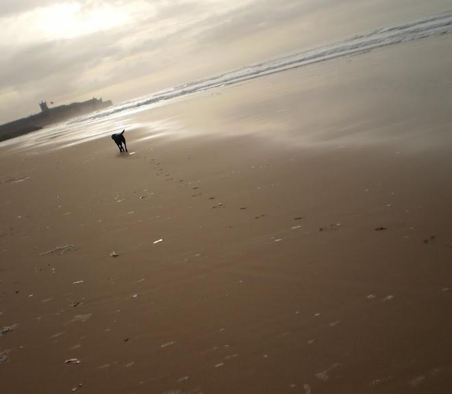 Violeta na praia
