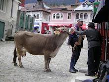 cu vaca la...un coniac