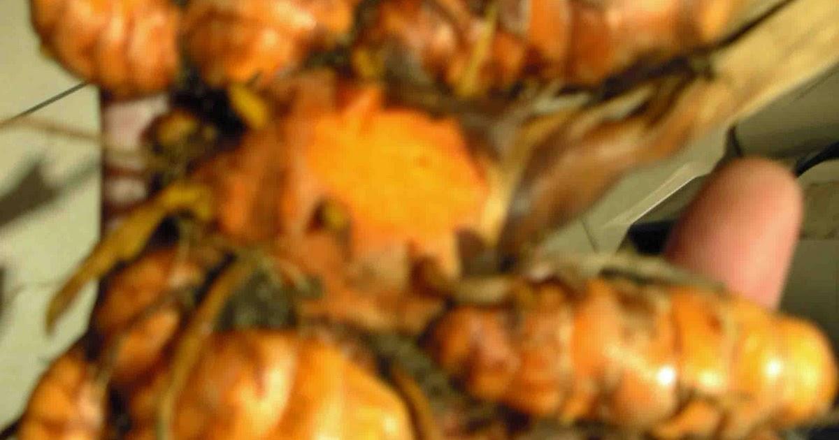 Je suis responsable de ma sant famille gingembre - Planter du curcuma ...