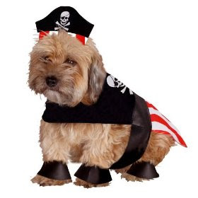 Dog Halloween Costume: Pirate