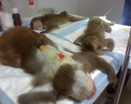 of animal testing: