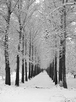 عکس زمستان ایرانی