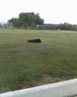 [lawn.aspx]