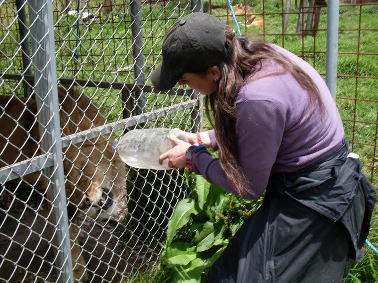Hydratation du lion, mis à part, quand bébé lion est apparu (merci David)