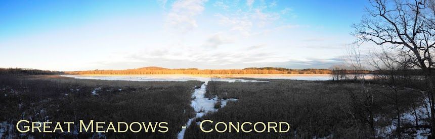 Great Meadows Concord