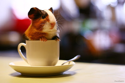 Conejillo de indias: Sweet Coffee