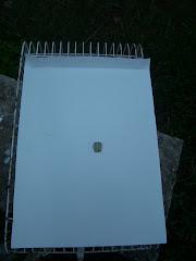 Cartolina com um furo para colocar um poleiro e prender na grade da Gaiola