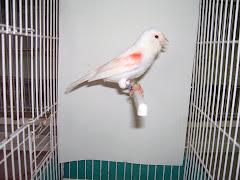 Foto Tirada com a ave dentro da Gaiola