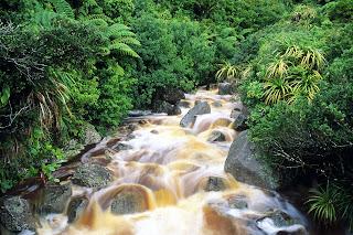 Karamea, South Island, New Zealand