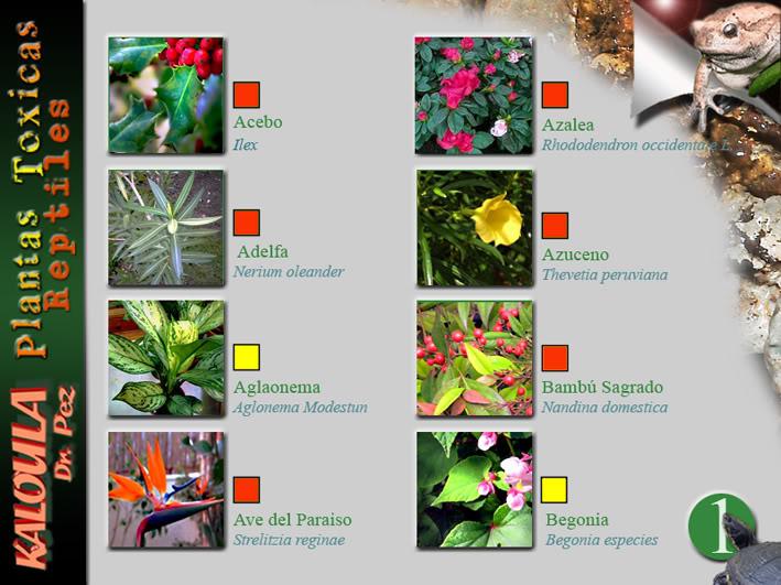 Kaloula fichas plantas t xicas - Fichas de plantas para ninos ...