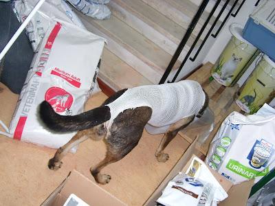 Mica - A cadelinha SRD mais meiga do mundo ;) Margem Sul SL272189