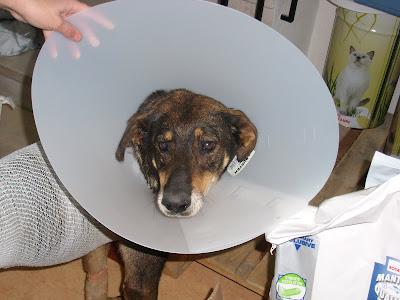 Mica - A cadelinha SRD mais meiga do mundo ;) Margem Sul SL272191