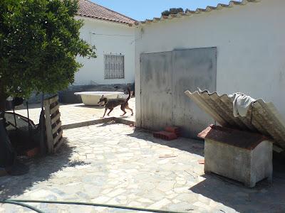 Mica - A cadelinha SRD mais meiga do mundo ;) Margem Sul Leaomica+(1)