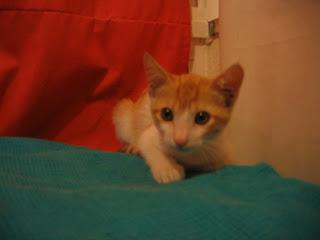 Star e Samantha > Duas gatinhas pequerruchas para adopção! IMG_1126