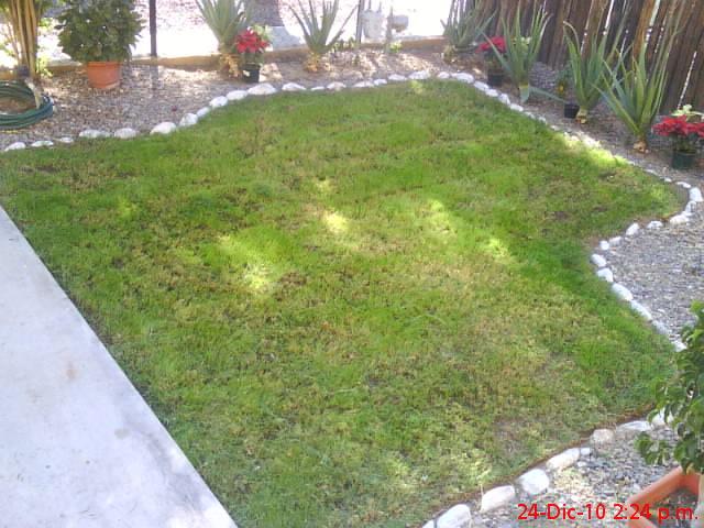 Mi jard n de hogar pasto de invierno - Como plantar cesped en el jardin ...