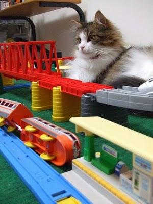 пушистый кот, игрушечная железная дорога