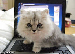 laptopkitty