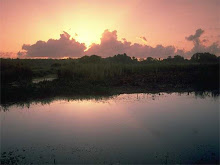Morning in the 'Glades