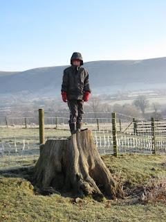 Cameron on a high tree stump