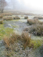 Clumps of grass and frozen bog with mist