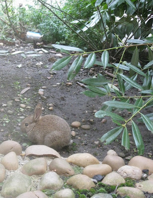 Rabbit and foliage