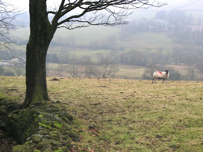 Lone sheep and tree in a misty field