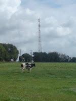 Antenne relai de Trégarvan