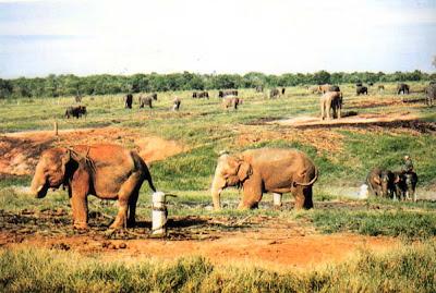 Foto Obyek Wisata Taman Nasional Way Kambas