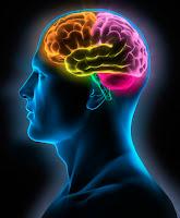 external image cerebro-humano.jpg