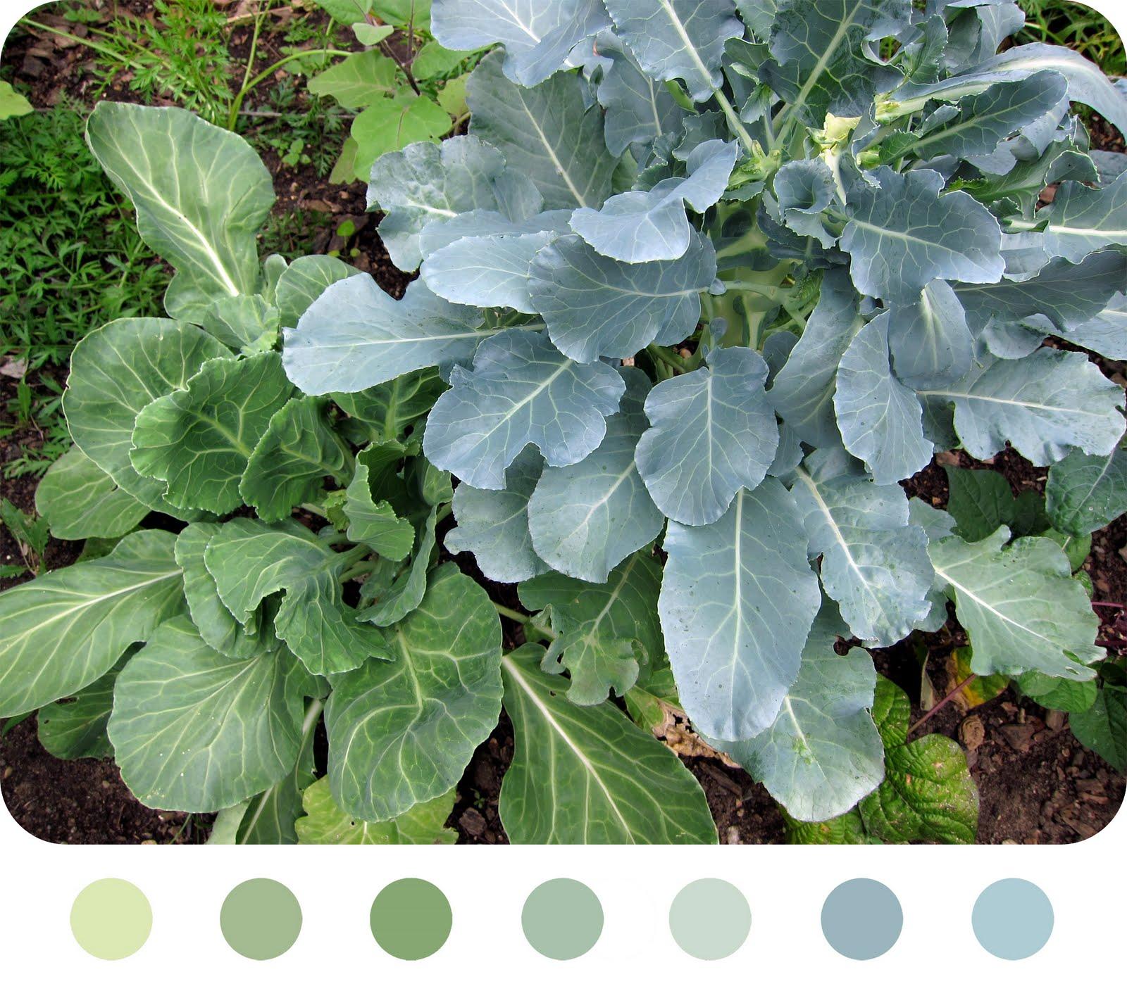 http://1.bp.blogspot.com/_MiIBjnU0ovc/TGnzYrazQ_I/AAAAAAAACHo/RUbXNG6Sz04/s1600/garden+greens.jpg
