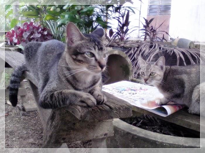 Gambar Kucing Menangis godean.web.id