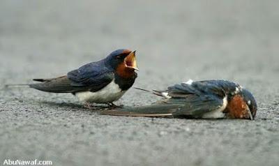 Foto Kisah Sepasang Burung Yang Mengharukan