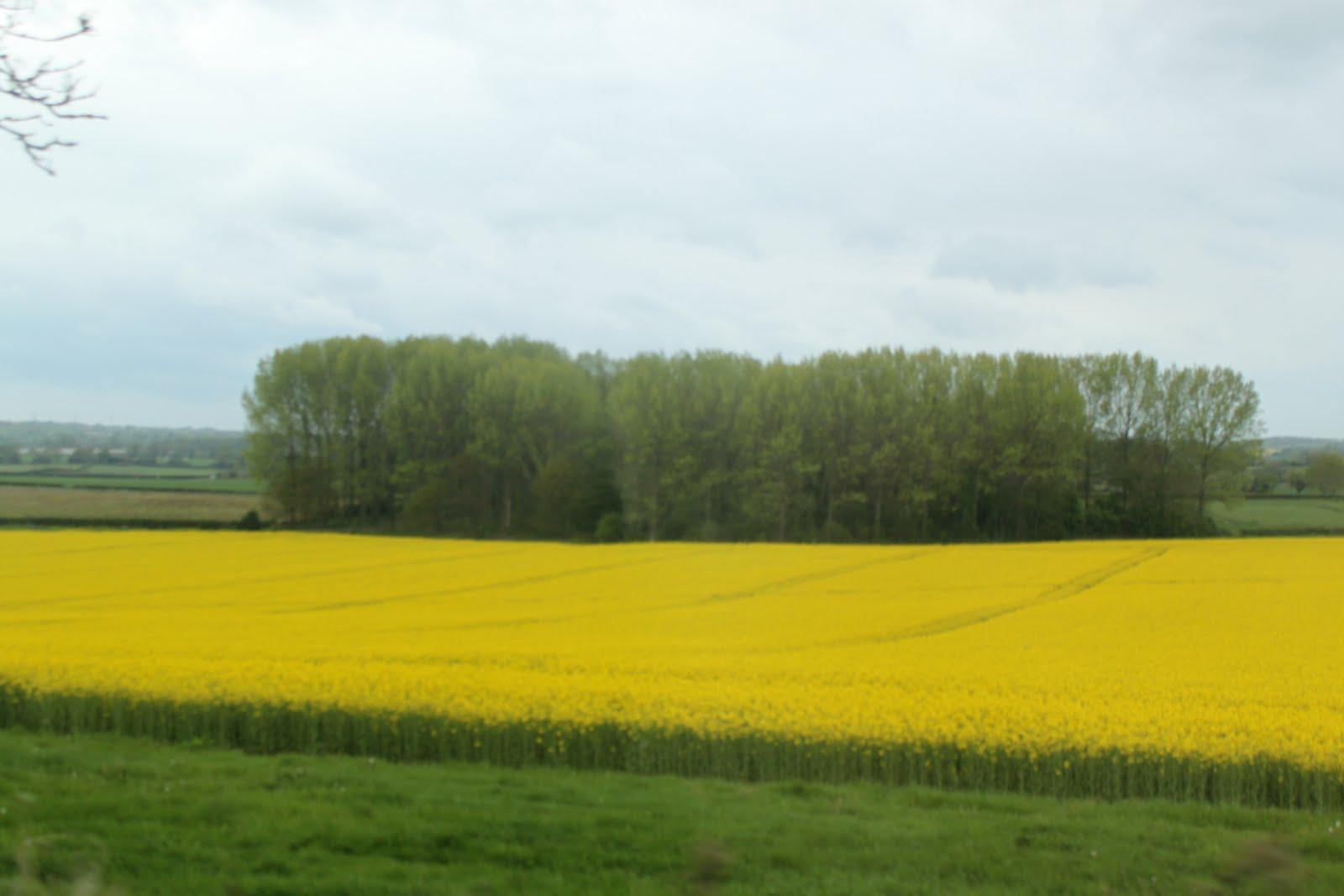 A Good Scottish Name Seas Of Yellow