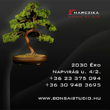 Bonsaistudio.hu