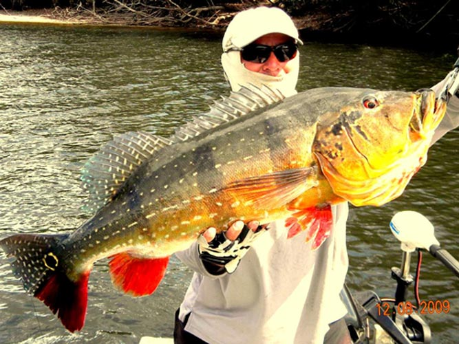 Fly fish addiction most exotic species to catch on a fly for Golden dorado fish