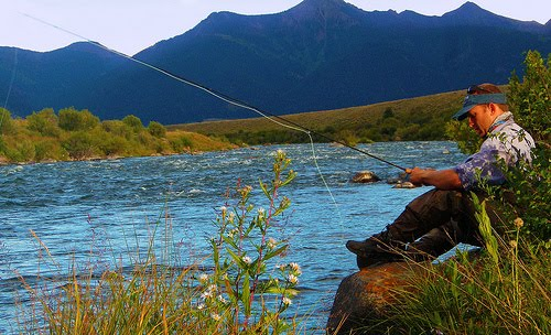 Madison river fly fishin for Fly fishing yellowstone river