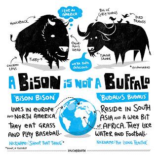 bison versus buffalo